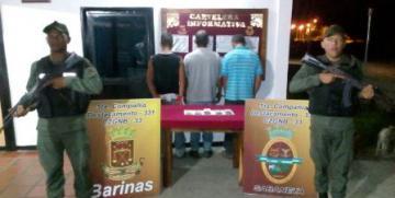 GNB detuvo a tres ciudadanos por robo de ganado y 25 animales bovinos recuperados en el estado Barinas