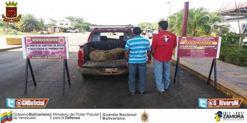 GNB Guárico aprehendió a dúo por abigeato