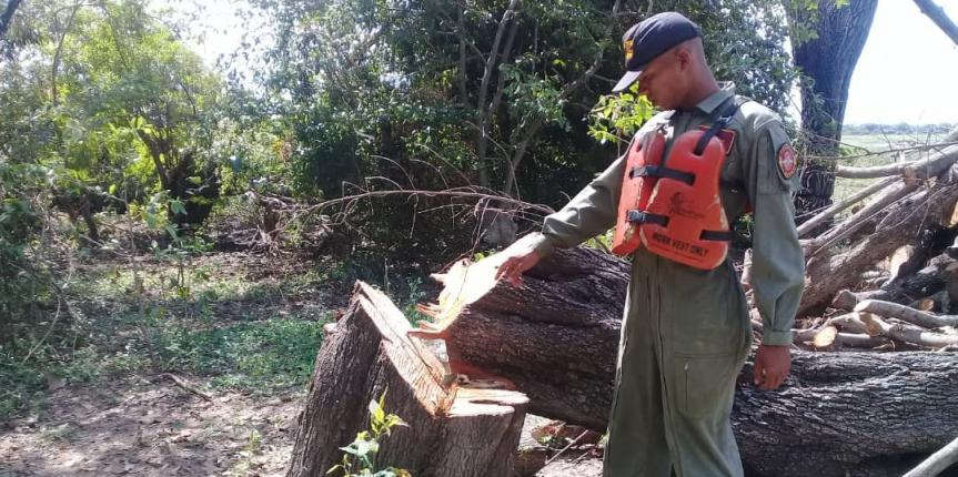 Comando de Vigilancia Costera efectuó la incautación de madera  en el estado Apure