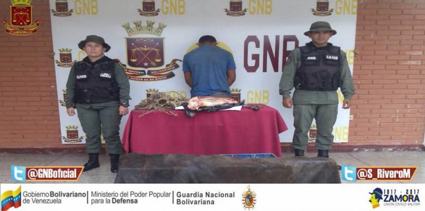 GNB capturó a ciudadano por robo de ganado en Barinas